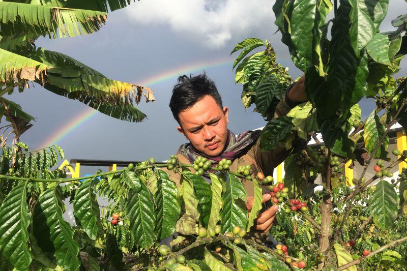 Petani kopi arabika organik di Poso bakal dibina pengusaha asal Jerman