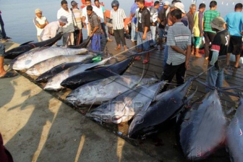Potensi perikanan Simeulue capai 74 ribu ton per tahun