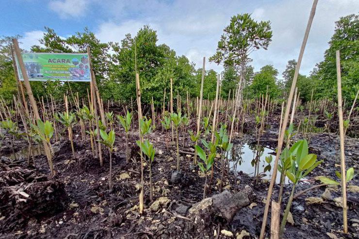 BRGM merehabilitasi 1.500 hektare hutan mangrove di Papua Barat selama 2021