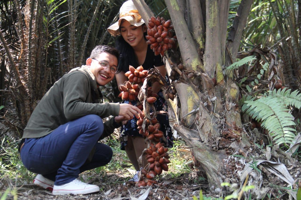 Taman Buah Mekarsari panen salak 1 ton dan mangga Chokanan